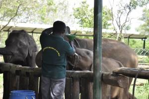 07 - Milk for baby elephants Elephant Transit Home