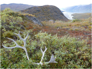 Austmannadalen - Greenland
