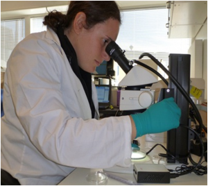 Jillian Steele examining caribou samples under microscope