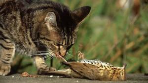 cat-kills-bird