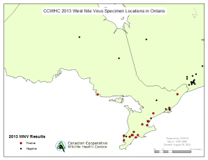 Dead bird WNV locations in Ontario as of August 16, 2013.