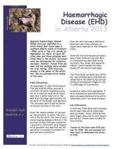 EHD in Alberta 2013
