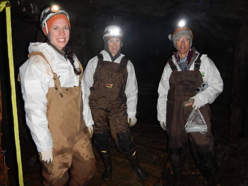 Allysia Park, Darlene Weeks and Don McAlpine counting hibernating bats in New Brunswick - Photo: Karen Vanderwolf