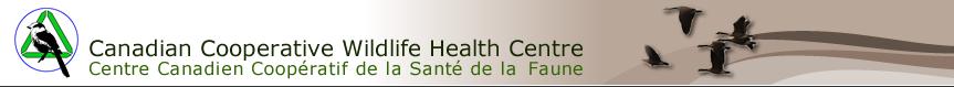 CCWHC Header