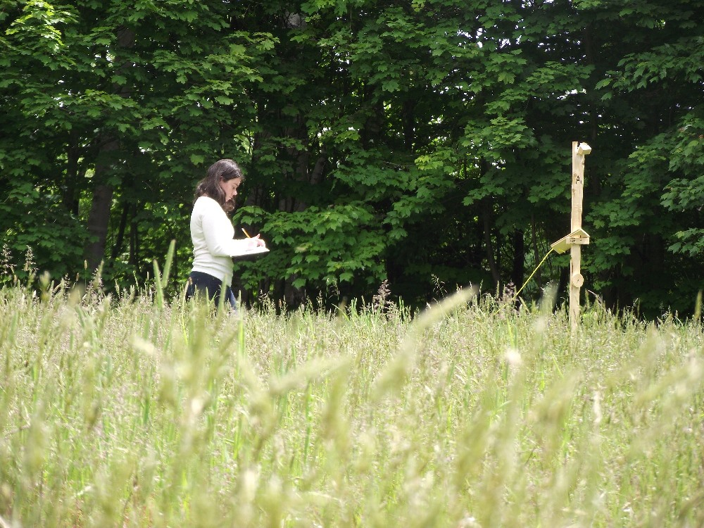 Volunteer performing carcass counts in the short grass