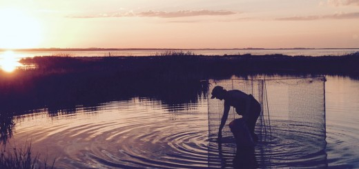 Collin Letain setting a waterfowl trap for avian influenza monitoring