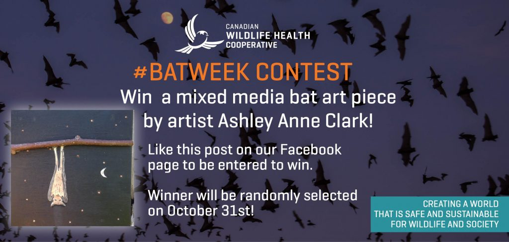 bat-art-contest