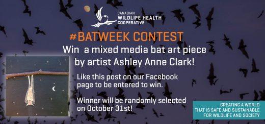 bat-art-contest