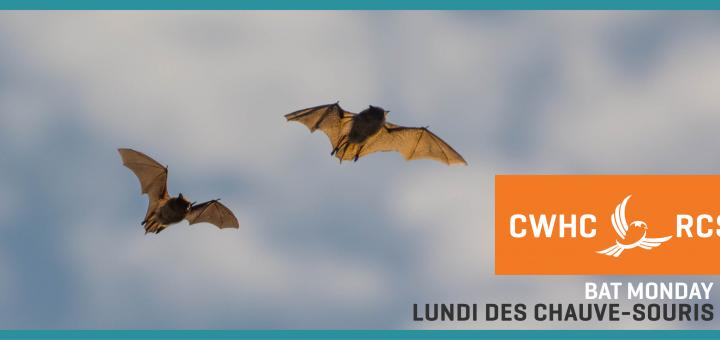 bat-monday